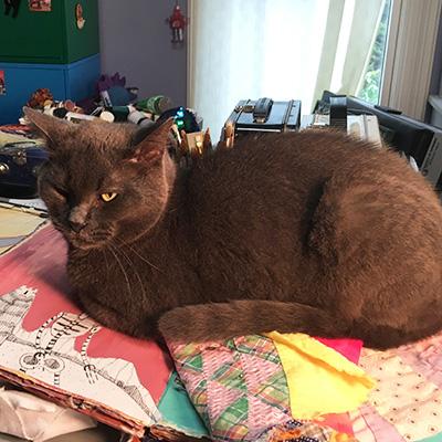 Mixed Media Artist Cat